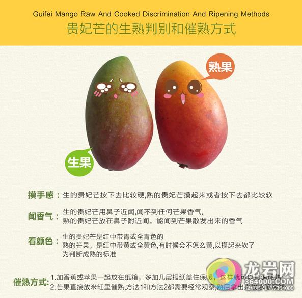 来过海南岛,美食忘不了工房香港厨具芒果图片